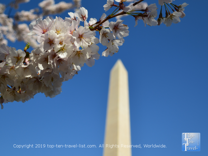 Springtime cherry blossoms in Washington DC