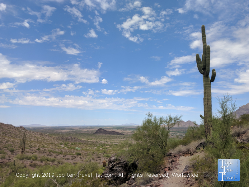 Tall cacti lining the Calloway trail at PIcacho Peak State Park in Arizona