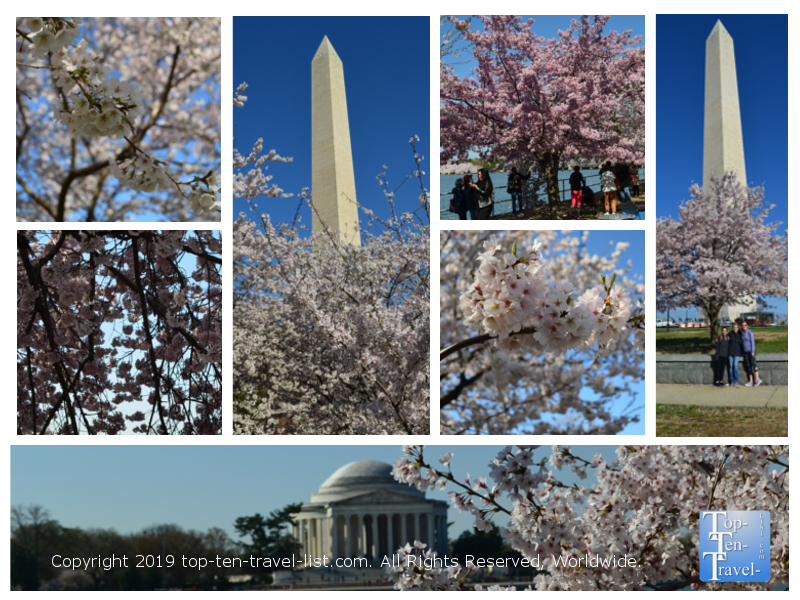 Cherry blossoms in Washington D.C. 2019