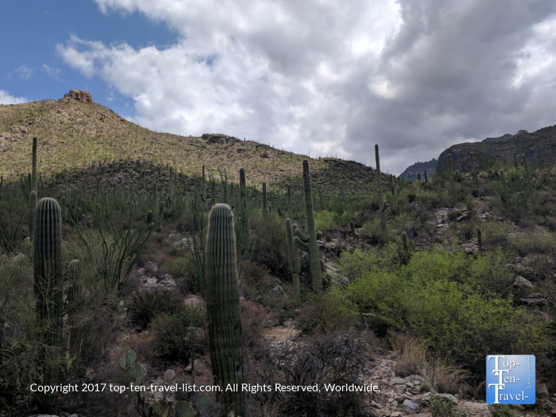 Beautiful-desert-scenery-along-the-Pima-Canyon-trail-in-Tucson-AZ