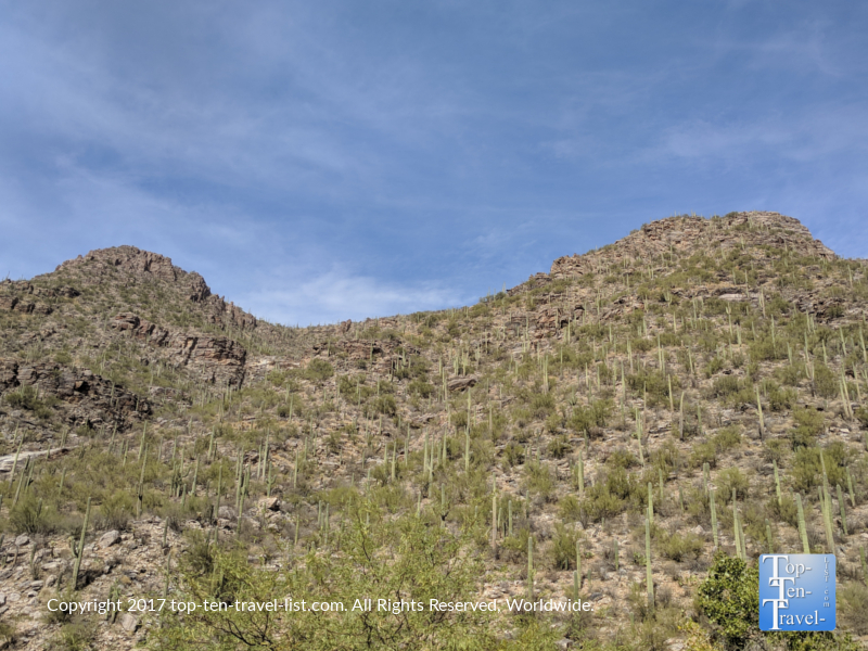 Mountains covered with cacti at Sabino Canyon in Tucson, Arizona
