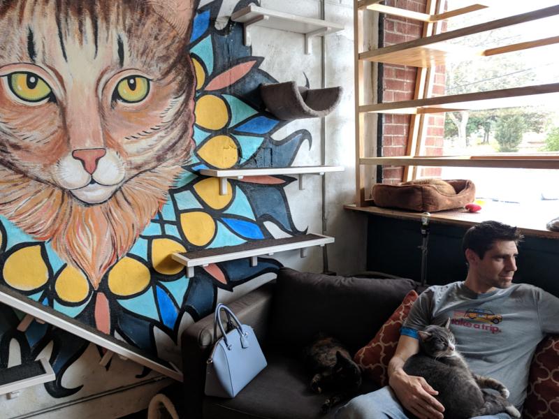 Java Cats Cafe in Atlanta, Georgia