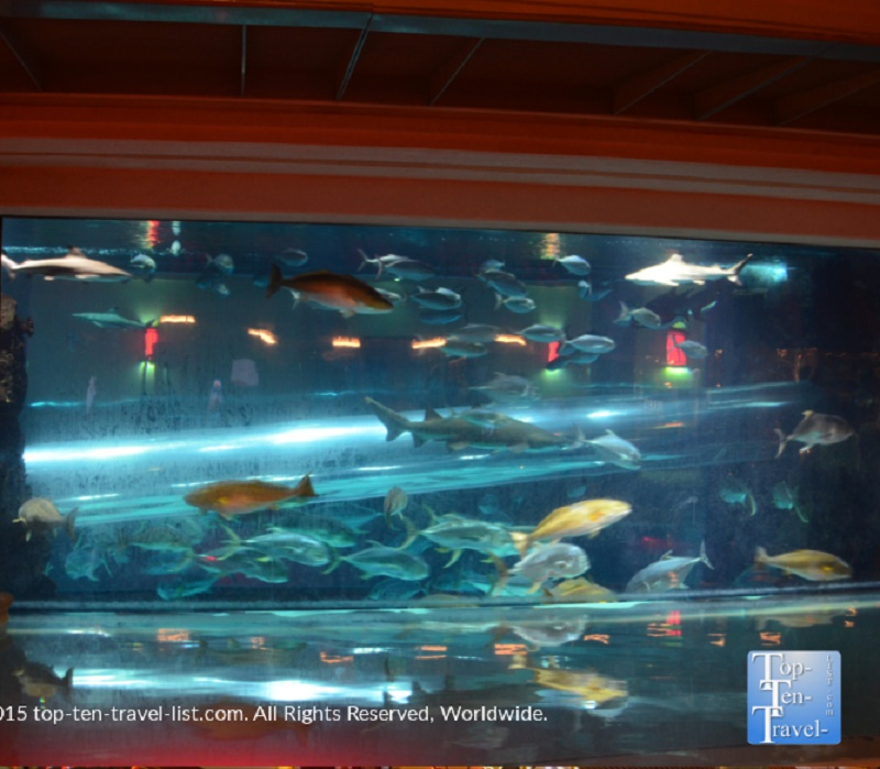 The Golden Nugget shark tank in Vegas