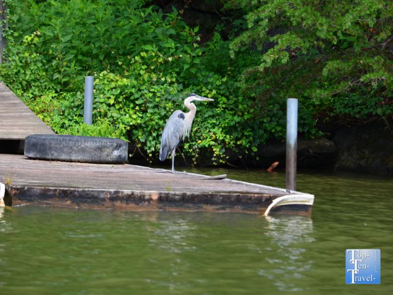 Birdwatching on Lake Lure