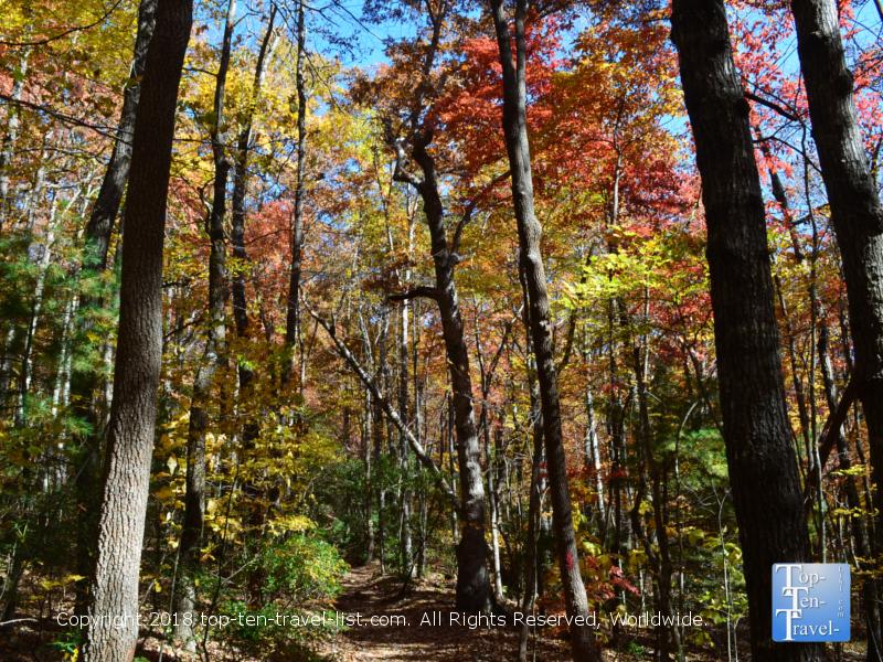 Fall foliage at Caesars Head State Park in Upstate South Carolina