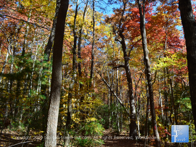 Gorgeous foliage at Jones Gap State Park in Upstate South Carolina