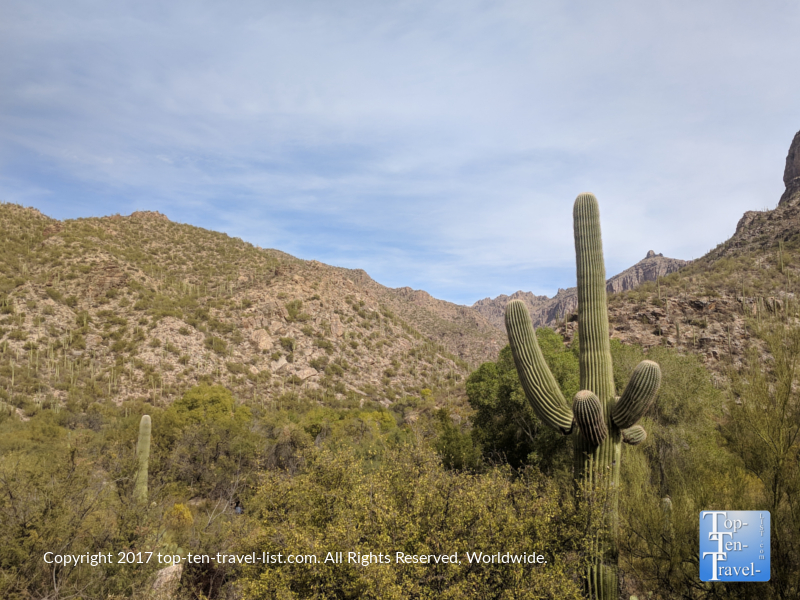 Pretty scenery at Sabino Canyon in Tucson, Arizona