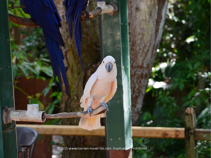 Exotic birds at Sarasota Jungle Garden