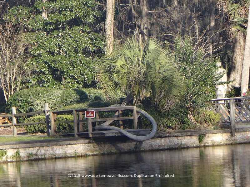 Horseshoe shaped palm at Silver Springs State Park in Florida