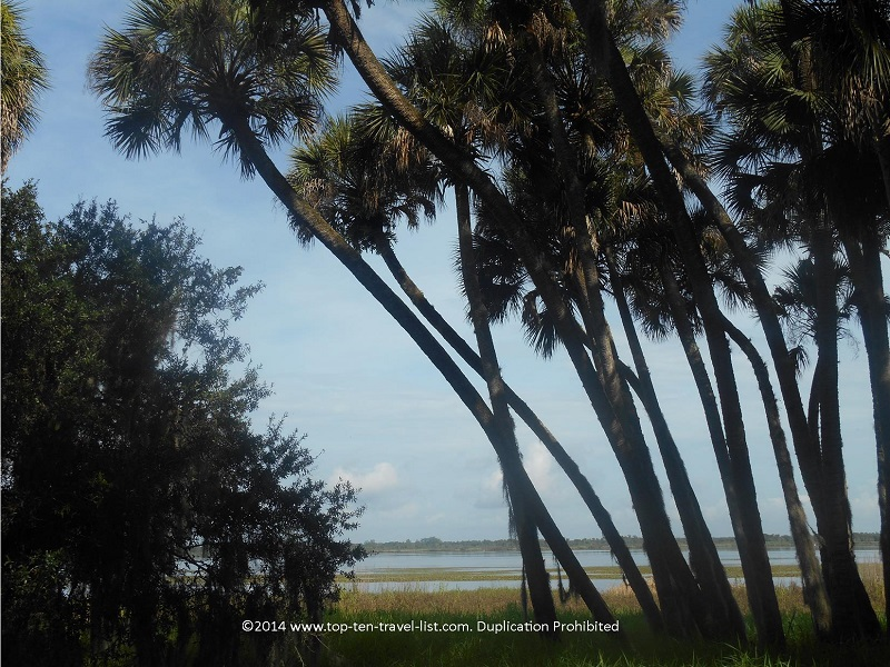 Pretty scenery at Myakka River State Park in Sarasota, Florida