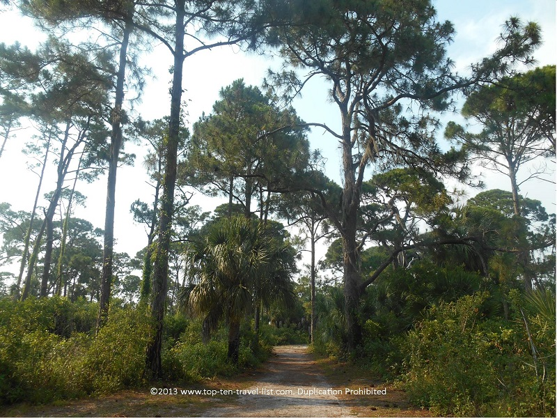 Nature trail at Honeymoon Island State Park in Dunedin, Florida