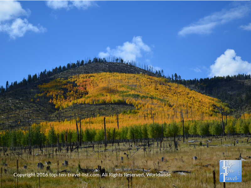 Mountains covered with golden aspens - autumn in Flagstaff, Arizona
