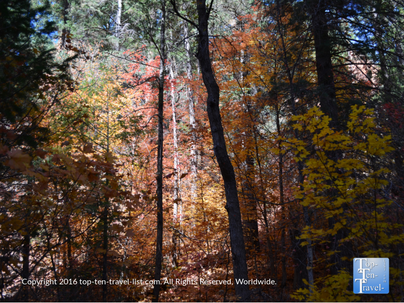 Spectacular fall foliage along West Fork in Oak Creek Canyon