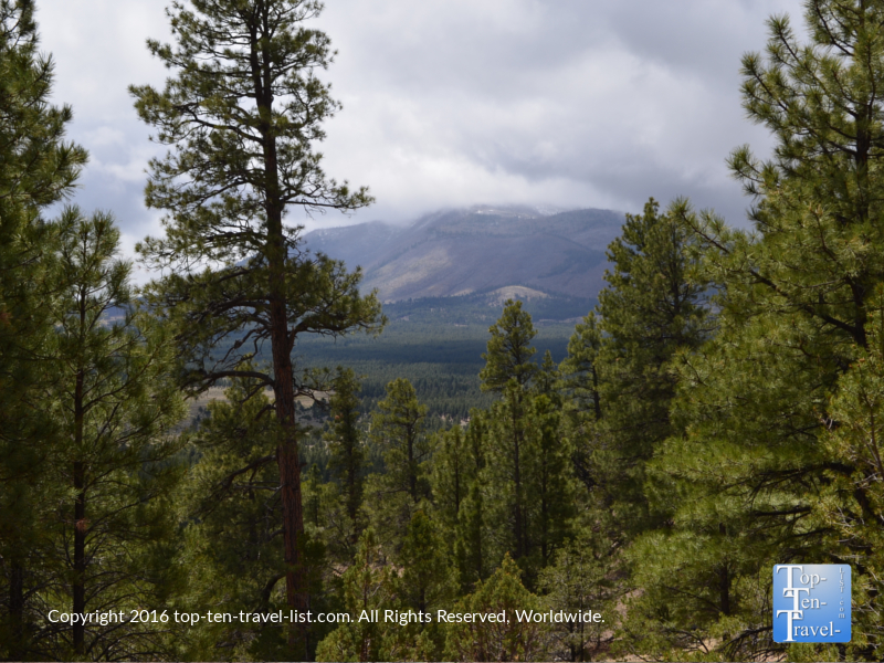 Pretty ponderosa pines and mountain scenery along the Slate Mountain trail near Flagstaff, Arizona
