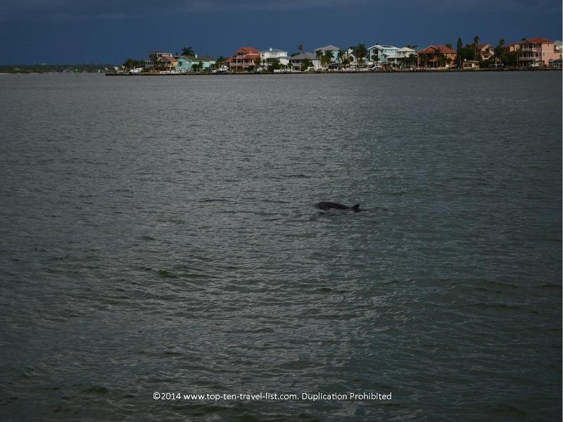 Madeira Island dolphin sightseeing cruise