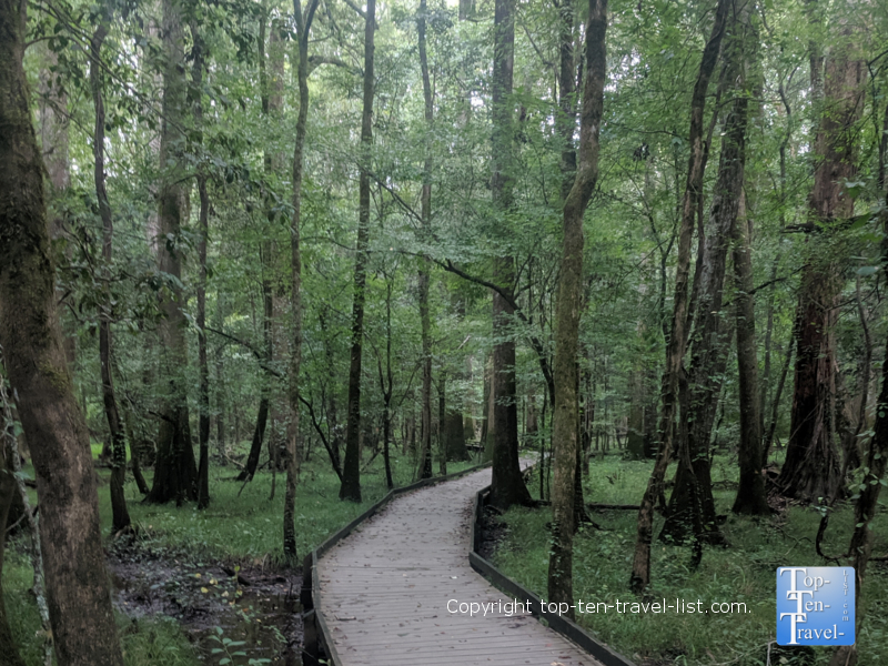 Beautiful hike through giant trees at Congaree National Park in South Carolina