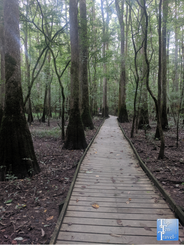 Boardwalk nature trail at Congaree National Park in South Carolina