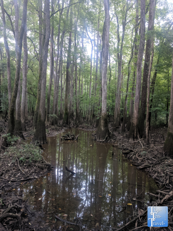 Swampy scenery at Congaree National Park in South Carolina