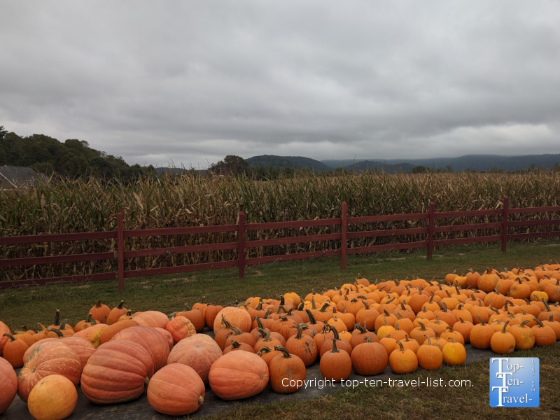 Pumpkin patch at Grandad's Apples in Hendersonville, North Carolina