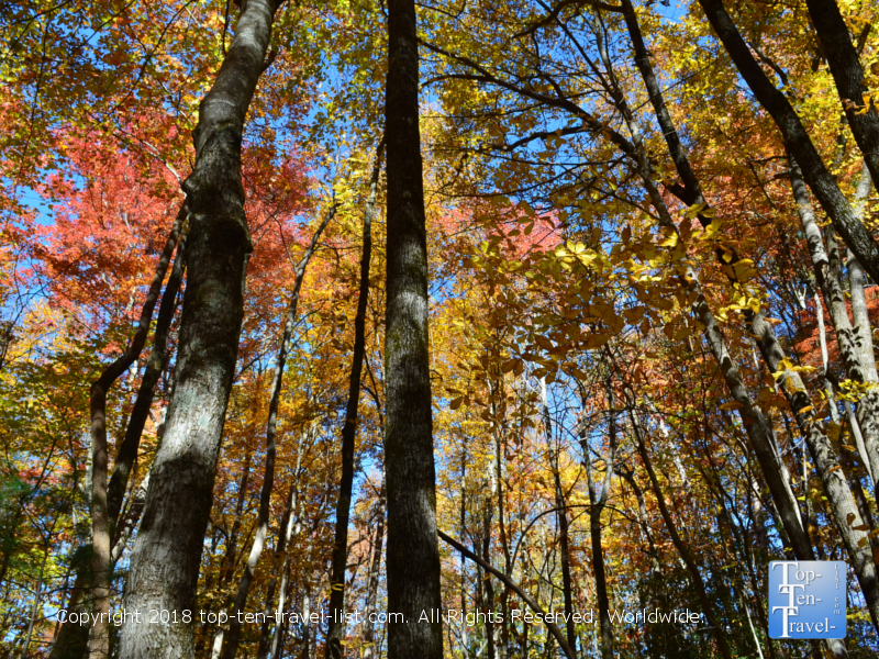 Amazing fall foliage along the Catawba Falls hiking trail near Asheville, North Carolina