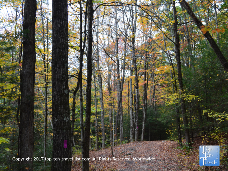 Beautiful foliage lining the Enders Falls trail in Granby, CT