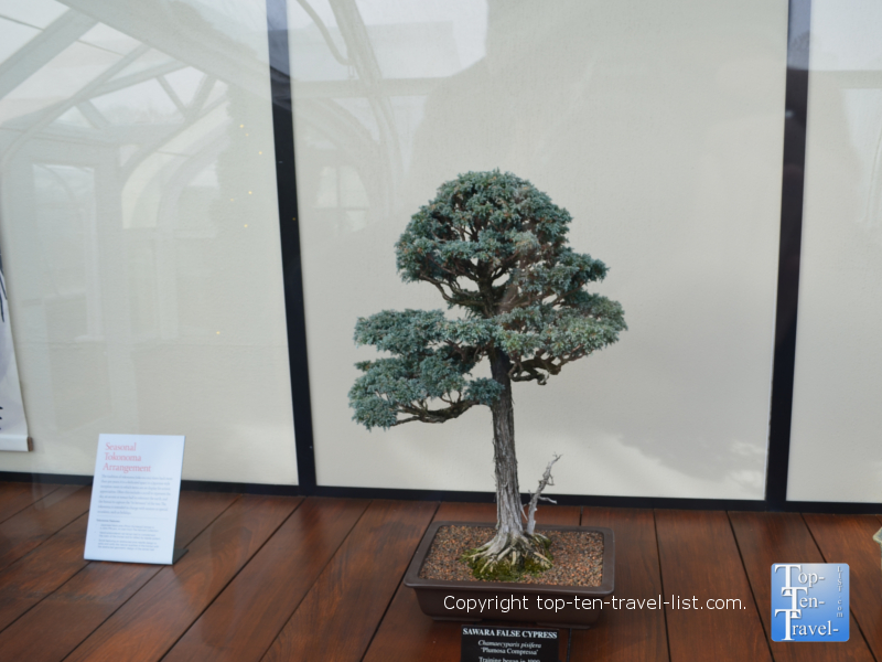 Beautiful Bonsai tree at Longwood Gardens in Pennsylvania