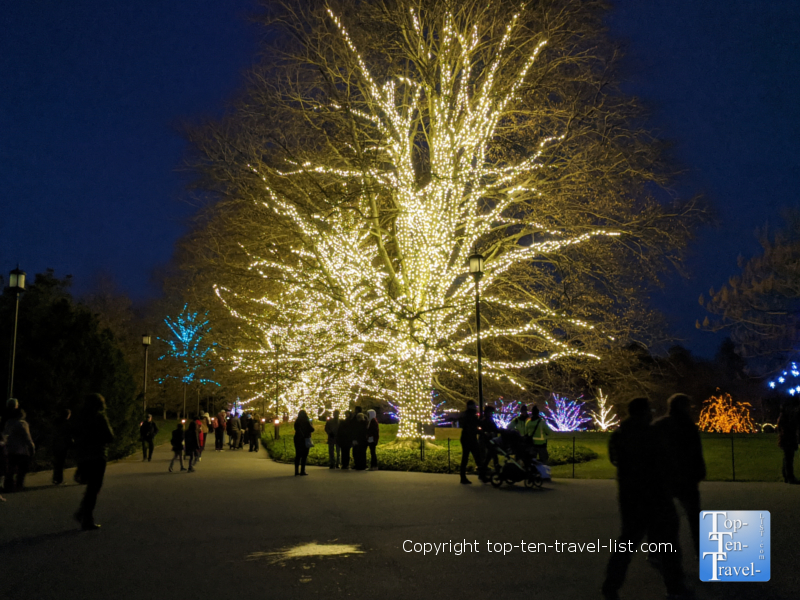 Beautiful trees lit up for the holidays during A Longwood Christmas in Pennsylvania