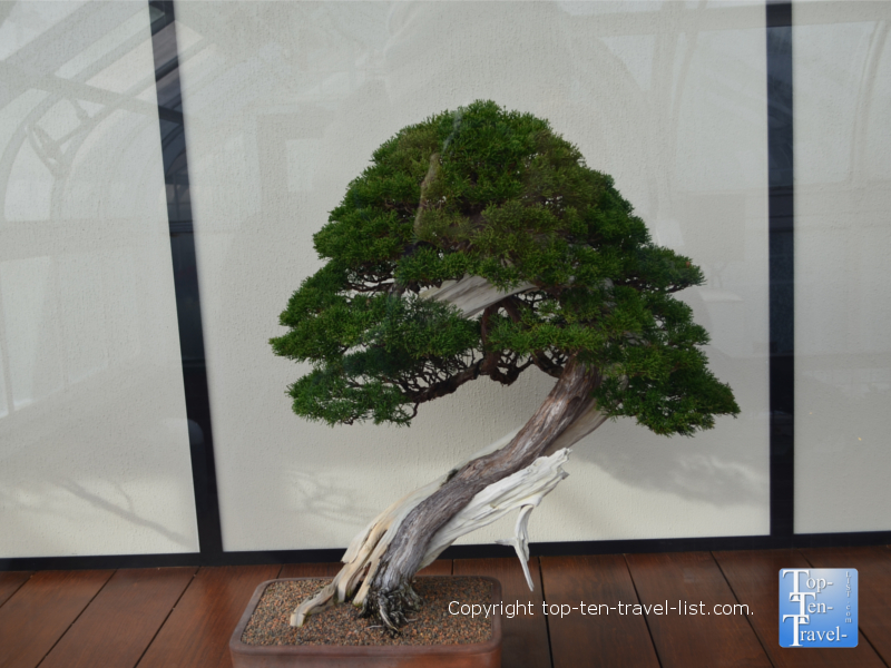 Bonsai at Longwood Gardens in Pennsylvania
