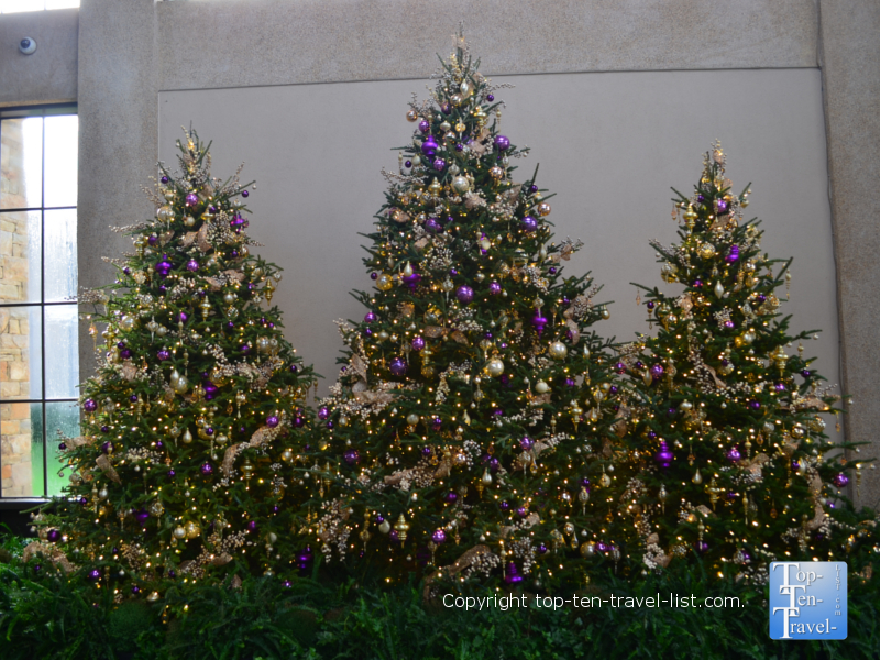 Dazzling Christmas trees at Longwood Gardens in Pennsylvania