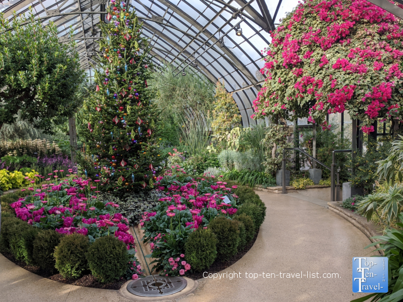 Beautiful plant life at Longwood Gardens in Pennsylvania