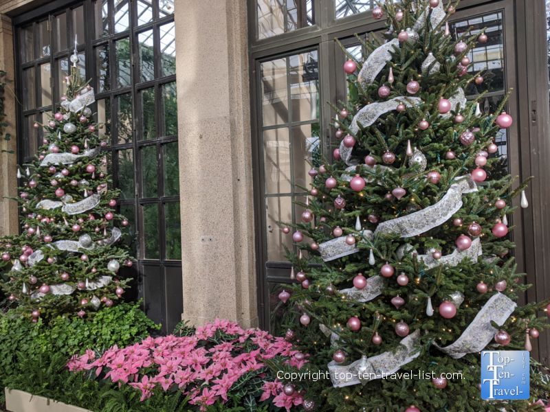 Christmas trees and poinsettias at Longwood Gardens in Pennsylvania