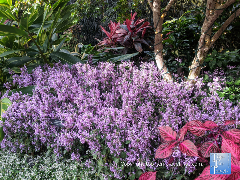 Gorgeous winter plant life at Longwood Gardens in Pennsylvania