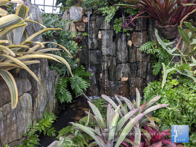Tropical plant life at Longwood Gardens