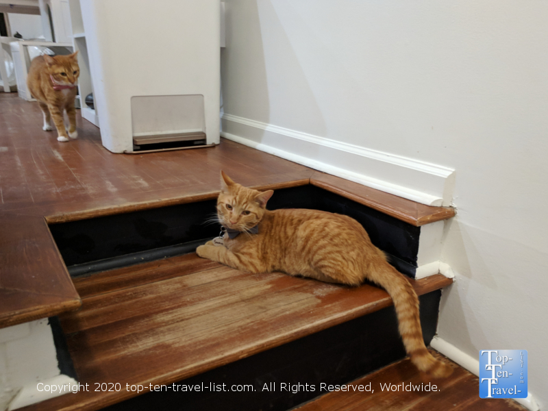 Two gorgeous orange tabbys at the Crumbs and Whiskers Cat Cafe in Washington D.C.