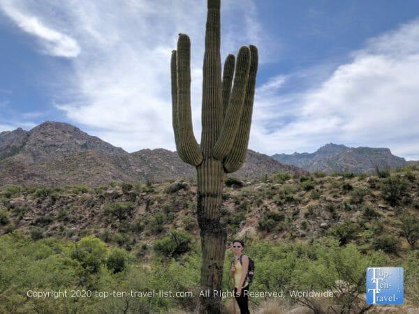 Tall Saguaro cactus at Catalina State Park in Oro Valley, Arizona