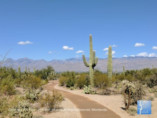 Trail at Saguaro National park in Tucson, Arizona