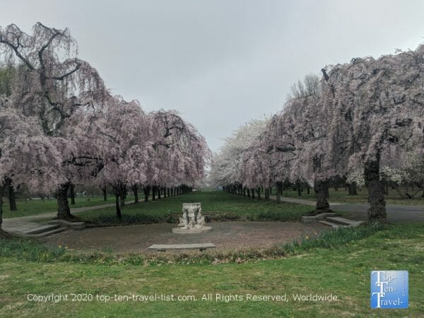 Philly's beautiful Fairmount Park during cherry blossom season