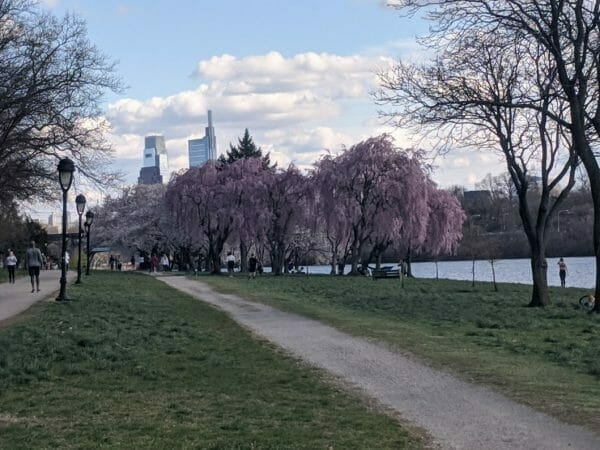 Kelly Drive - the Schuylkill River trail during Philly's beautiful cherry blossom season