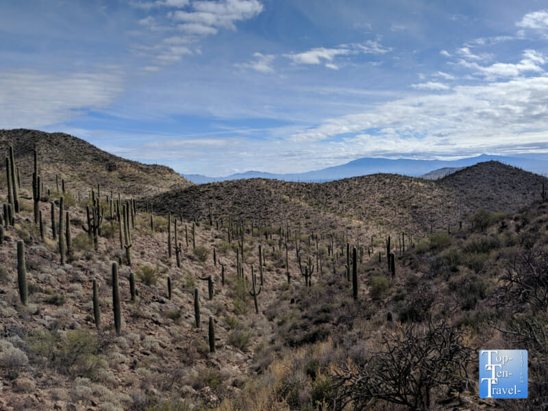 Terrific mountain and cacti scenery along the Bowen Hidden Canyon Trail in Tucson, Arizona