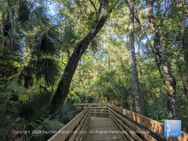 Nature boardwalk at Lettuce Lake Park in Tampa, Florida