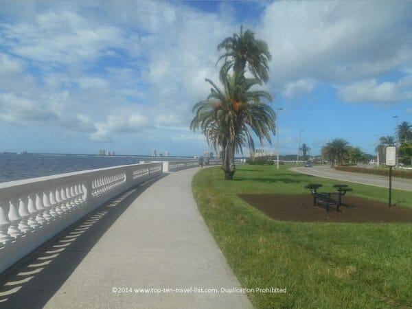 Palm trees on the beautiful Bayshore Blvd biking path in Tampa, Florida