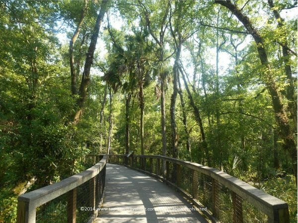The boardwalk trail at Brooker Creek preserve in Tarpon Springs, Florida