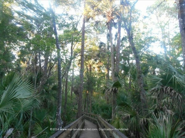 Boardwalk nature trail at John Chestnut Park in Palm Harbor, Florida
