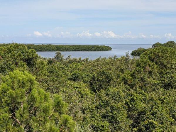 Beautiful vista at Wall Springs Park in Palm Harbor, Florida