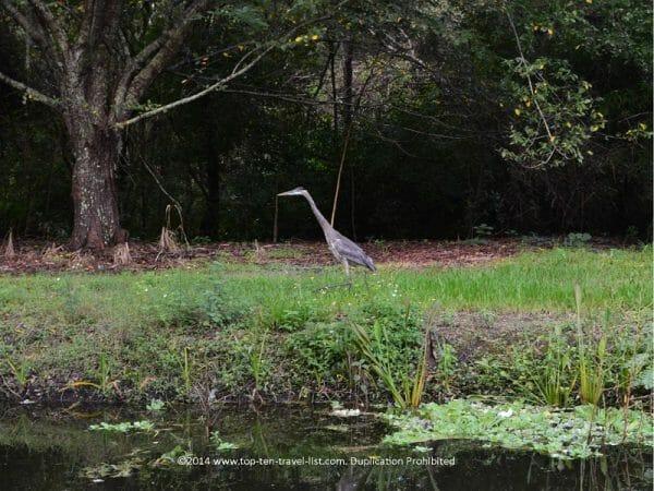 Birdwatching at Sawgrass Lake Park in St. Petersburg, Florida
