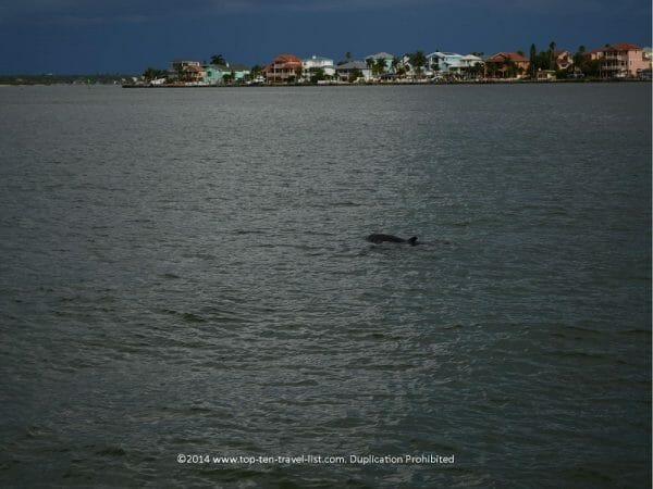 Dolphin sighting in Madeira Beach on Florida's Gulf Coast