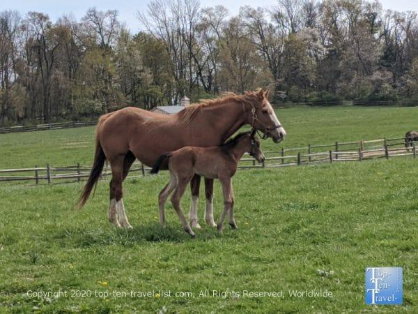 Gorgeous horses at Willow Lake Farm preserve in Ambler, PA
