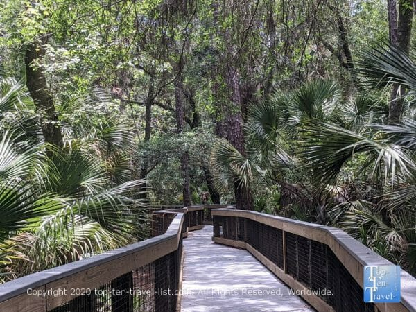 The lush boardwalk trail at John Chestnut Park in Palm Harbor, Florida