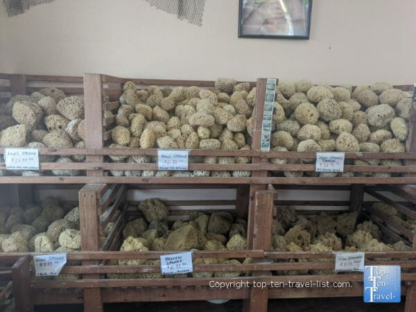 Natural sea sponges at Lori's Soaps and Sponges in Madeira Beach, Florida