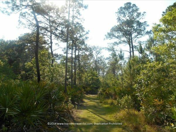 Nature trail at Brooker Creek preserve in Tarpon Springs, Florida